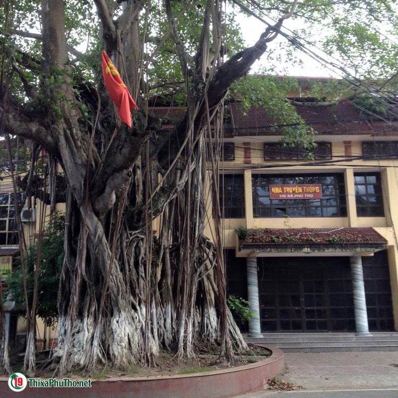 Cây Đa Lịch Sử và Nhà Truyền Thống thị xã Phú Thọ