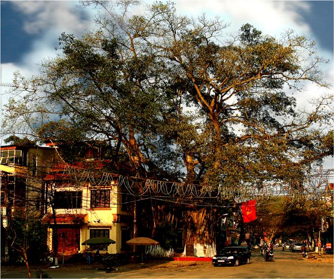 Cây đa lịch sử làng Mè, Phú Thọ