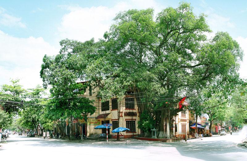 Cây Đa Lịch Sử - Thị xã Phú Thọ