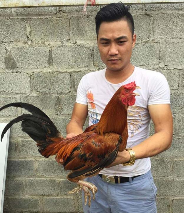 Độc kê - gà 10 cựa duy nhất tại Việt Nam