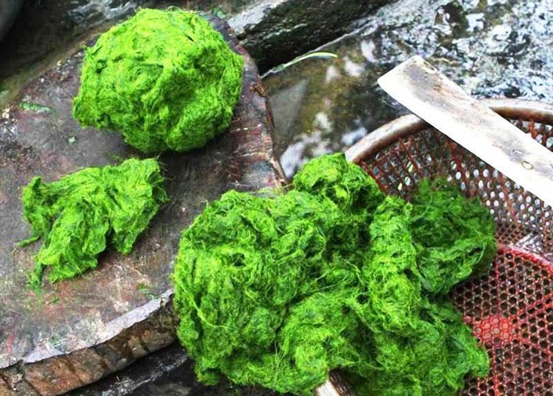 Chế biến món rêu đá