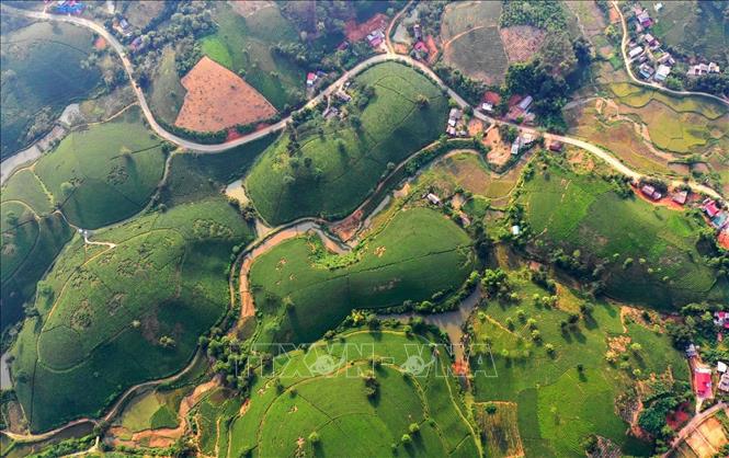 Ốc đảo chè Long Cốc, Tân Sơn, Phú Thọ